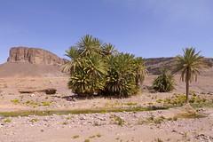 2018-3991 (storvandre) Tags: morocco marocco africa trip storvandre marrakech marrakesh valley landscape nature pass mountains atlas atlante berber ouarzazate desert kasbah ksar adobe pisé