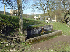 Glyndwr's Way 006 (Row 17) Tags: wales powys nationaltrail path footpath rural sheep trough water
