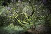 seleger moor-7695 (ver.sus) Tags: selegermoor moor plants rhododendron park pflanzen seleger