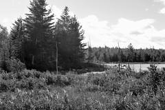 Maine Wilderness - BW (RockN) Tags: stumppond august2016 bw baxterstatepark maine newengland