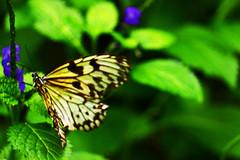01.05.2018: Papiliorama