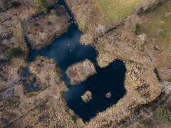 Swan lake (HenrikHansen) Tags: drone dji mavic nature landscape lake swan birds trees forest denmark jutland padborg summer spring