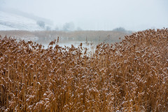Reeds surround a lakeshore in winter (Raoul Pop) Tags: shore reeds snowfall lake winter snow cold somewhere transilvania romania ro