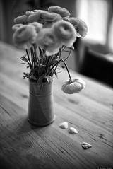 Les bras m'en tombent (Mathieu HENON) Tags: leica leicam m240 noctilux 50mm noirblanc nb bnw blackwhite monochrome stilllife naturemorte bouquet fleurs flowers renoncules table