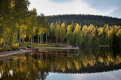 Birches and Reflections (aivar.mikko) Tags: birches birch reflections reflection karankalampi lake koli national park sunset fallcolors finland fall autumn scandinavia outdoors north northern finnishlandscapes finnish landscapes landscape viewpoint karelia käränkälampi trees