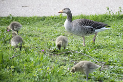 "mothergoose • <a style=""font-size:0.8em;"" href=""http://www.flickr.com/photos/157241634@N04/27967344968/"" target=""_blank"">View on Flickr</a>"