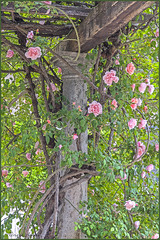 3 maggio 2018. Roma, Terme di Diocleziano, ingresso del Museo Nazionale Romano (adrianaaprati) Tags: rome nationalromanmuseum roses spring columns antiquities may