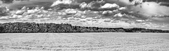 view to the forrest (MAICN) Tags: 2018 landscape landschaft nature himmel mono sw natur clouds wiese trees bw blackwhite tree grassland forest schwarzweis bäume sky wald einfarbig baum wolken monochrome