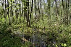 IMGP14145 (Łukasz Z.) Tags: lubelskie rzeczpospolitapolska poleskiparknarodowy nationalpark sigma1750mmf28exdchsm pentaxk3
