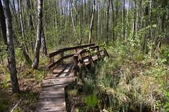 IMGP14121 (Łukasz Z.) Tags: poleskiparknarodowy nationalpark starezaucze lubelskie rzeczpospolitapolska sigma1750mmf28exdchsm pentaxk3