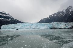 MS Westerdam - 7 Day Alaska May 2018 - Glacier Bay-222.jpg (Cindy Andrie) Tags: alaska hollandamerica d800 nature britishcolumbia beach victoriabc westerdam glacierbay landscape nikon cindyandrie canada andrie glaciers nikond800 cindy