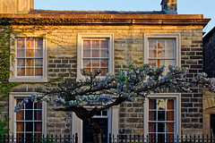 Almonds (scottprice16) Tags: england lancashire clitheroe ribblevalley building house street tree blossom spring morning sunlight outdoors architecture fence colour stone 2018 may churchstreet door doorway home environment canon canoneos60d sigma sigma1835mmartf18 art shutters