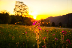 Flower (RA LO Fotografie) Tags: canon flower blume sunset sundown bokeh