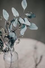 mai-6020 (h o t a r u) Tags: stilllife flora floral flowers flower bloom naturallight dof color pop soft pastel detail windowlight