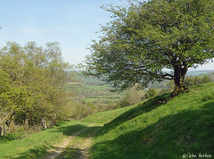 Glyndwr's Way 014 (Row 17) Tags: wales powys nationaltrail hill hills hillside track path footpath lumix panasonic