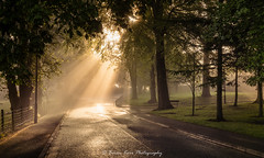 Let There Be Light (.Brian Kerr Photography.) Tags: carlisle cumbria landscapephotography sunlight earlymorning mistymorning misty photography landscape trees sonyuk a7rii formatthitech firecrest vanguarduk availablelight outdoor outdoorphotography opoty nature naturallandscape natural briankerrphotography briankerrphoto parkvillage road mist tree park grass sky