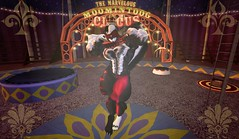 The spectacular Skunk (Hunky Skunky) Tags: skunk muscle circus magic carnaval tent hairy second life secondlife