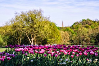 Tulip Landscape Westfalenpark Dortmund