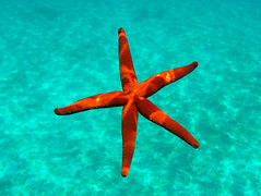 GOPR8629 (urbanlifelens) Tags: mare sea seascape alghero alguer sardegna sardinia underwater fishes pesci seastar stellamarina coast costa sky cielo sun sole