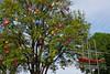 Der GiessKannenBaum (H. Eisenreich) Tags: eisenreich hans fujifilm baum kannen regadera tree wateringcan can heike ship schmidmühlen gieskanne