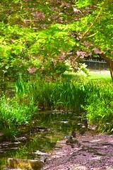Wildlife local May_2630 (Adam Swaine) Tags: spring springblossom parks londonparks woodland trees tree waterways peckehamryepark uk naturelovers nature canon blossom colours england english britain ukcounties beautiful