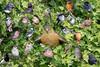 A Montage of my garden friends (Steve (Hooky) Waddingham) Tags: stevenwaddinghamphotography bird british montage