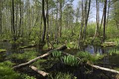 IMGP14151 (Łukasz Z.) Tags: starezaucze lubelskie rzeczpospolitapolska poleskiparknarodowy nationalpark sigma1750mmf28exdchsm pentaxk3