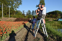 These days you need a ladder, Lisse, May 6, 2018 (cklx) Tags: tulips bollenstreek spring holland 2018 lisse