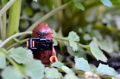 Bigfoot Sighting (linda_lou2) Tags: 365the2018edition 3652018 day128365 08may18 odc reveal 118picturesin2018 themeno115 lifeintheundergrowth 128365 365toyproject 60mm wildmustard lego minifigure minifig bigfoot series14 toy camera