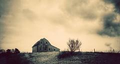 survival of the fittest... (BillsExplorations) Tags: barn farm iconic hillside fencefriday tree field interstate80 old abandoned decay ruraldecay forgotten oldbarn princeton illinois sepia snapseed sky survival