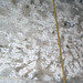 Fossiliferous limestone (Columbus Limestone, Middle Devonian; Sullivant Quarry, Columbus, Ohio, USA) 29