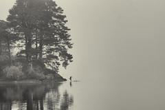 Lake District (aha42 | tehaha) Tags: uk lakedistrict lake tree trees bird duck mist fog bw