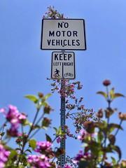 137/365: People go left, bikes go right, and adventurous plants go up.