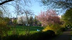 Promenade du soir le long du Robec (jeanlouisallix) Tags: rouen seine maritime haute normandie france robec rivière cours deau randonnées nature panorama lanscape paysage printemps