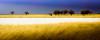Desert Breath (Beppe Rijs) Tags: etoshanationalpark natur namibia afrika africa desert wüste landscape landschaft color farbe abstrakt abstract blue blau yellow gelb gras grass nationalpark nature np namib