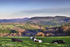 Point de vue sur le  Mont Saint Michel  de Braspart (Finistere) (pascalkerdraon) Tags: france bretagne brittany finisitere pen ar bed mont saint michel braspart rivoal benilis yeun monts darree