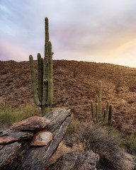 Bumble Bee-2580 (Michael-Wilson) Tags: michaelwilson arizona southwest sunset saguaro canyon cactus rock clouds sky vertical