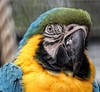 Hey, enjoy your week ahead! 😊 (LeanneHall3 :-)) Tags: parrot blue yellow green feathers bird closeup closeupphotography aviary eastpark hull kingstonuponhull canon 1300d