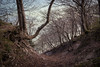 Place in the forest (BlossomField) Tags: forest trees sassnitz mecklenburgvorpommern deutschland deu