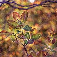 As An Painting Nature's (mikhailkorzhalov) Tags: canon domiplan manuallenses manual manualfocus 50mm 5028 f28 bokeh vintagelenses vintageprimes colors colorful branch branches leaves spring red gree yellow flora nature naturallight backlight outdoors day plant plants sunset