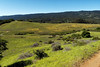 Ridge View (LeftCoastKenny) Tags: edgewoodpark mountains hills trees brush grass flowers wildflowers meadows trail