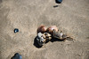 Crab Walk (alvbinoy) Tags: elnido palawan crab beach
