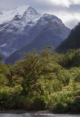 Mountains and trees (milo42) Tags: 2014 new zealand mountain httpwwwloveoflandscapecom httpwwwchrisnewhamphotographycouk south island boat location milford lake sound milfordsound newzealand southisland fiordlandnationalpark southland nz