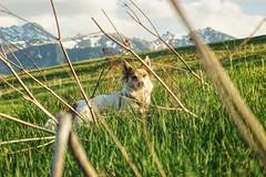 Beautiful view (karmanskipro) Tags: tatras tatry mountains dog dogwalk grass green