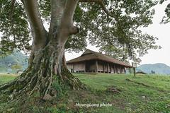 _Y2U8385.1113.Đình Nông Lục.Hưng Vũ.Bắc Sơn.Lạng Sơn (hoanglongphoto) Tags: asia asian vietnam northvietnam northeastvietnam landscape scenery vietnamlandscape vietnamscenery vietnamscene tree pagoda house home bacsonlandscape canon canoneos1dx đôngbắc lạngsơn bắcsơn phongcảnh phongcảnhbắcsơn cây nhà ngôinhà đình đìnhnônglục bãicỏ zeissdistagont3518ze hưngvũ grass