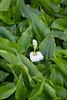 C91A8380.jpg (Inertia21) Tags: sevilla italica spain plantsflowers geography travel
