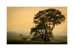 Baum mit Ausblick (linke64) Tags: thüringen deutschland germany natur landschaft baum abend himmel ausblick berge