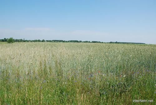 Волинь Літо 2011 року InterNetri Ukraine 2011 08