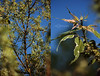 Projet 52 - S18 - Arbre (Chamaloote & Fabrizio) Tags: nature arbre feuille branche ciel bleu vert