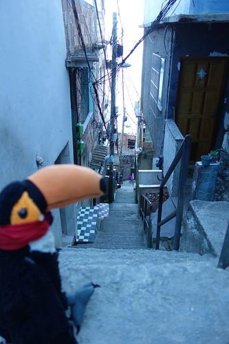 Pelico entrain de se rendre compte de toutes les marches à descendre